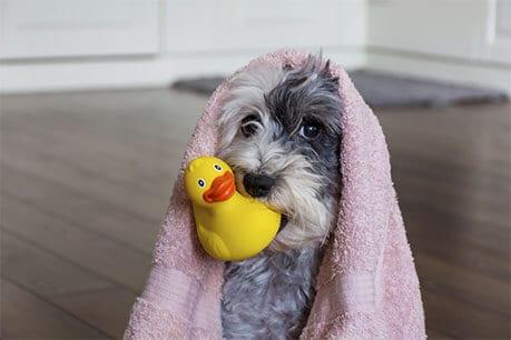 dog bath 5